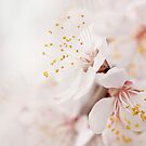 Bliss of Spring by PKGPhotography