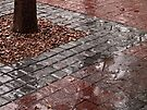 Gentle rain by awefaul