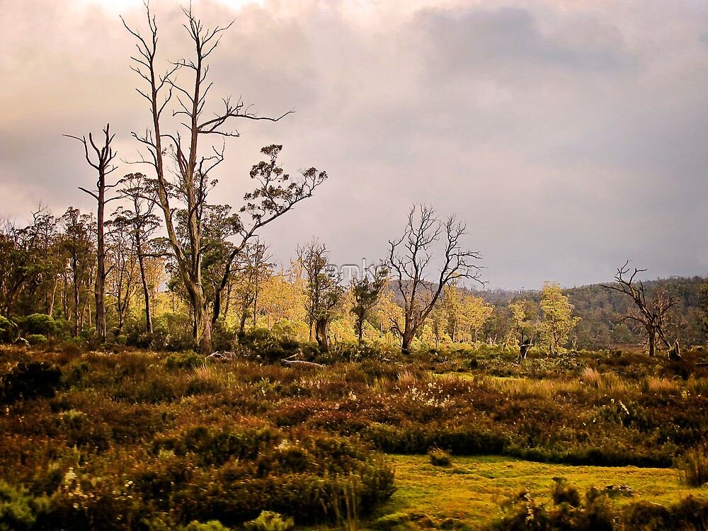 Along Cradle mountain Road by amko