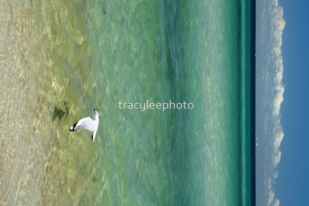 Sea Breeze by tracyleephoto