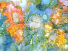 Butterfly by Stephanie Bateman-Graham