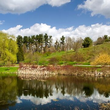 Spring Reflection Landscape by rollosphotos