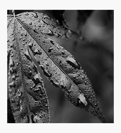 WET-LEAF Photographic Print
