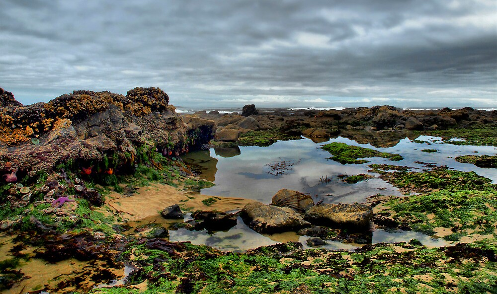 Low Tide by Charles & Patricia   Harkins ~ Picture Oregon