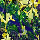 Iris fantasy by Margherita Bientinesi