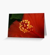 Macro Hibiscus Greeting Card
