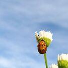 Ladybug Pupa - Daily Homework - Day 3 - May 9, 2012 by aprilann
