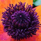 Pretty Blend by Brenda Dahl