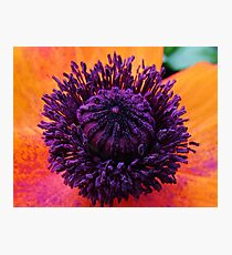 Pretty Blend Photographic Print