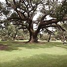 Charter Oak by Jory Authement