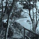 Path to Wategoes - Byron Bay  by Louise Linossi Telfer