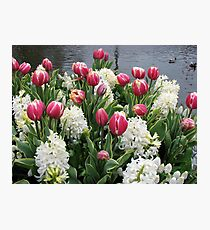 Flowers and Feathers - Keukenhof Gardens Photographic Print