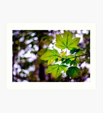 Just leaves and bokeh Art Print