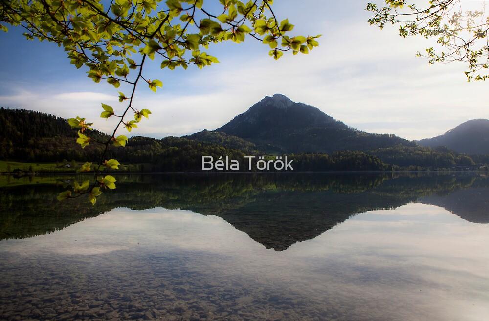 Spring reflections by Béla Török