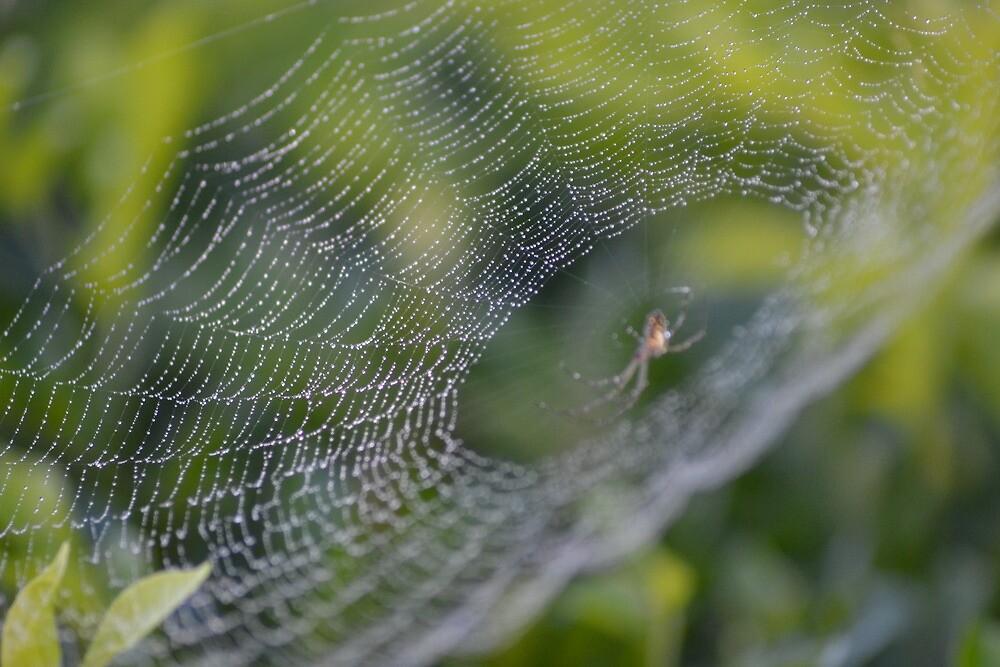 Lacy Web by TheaShutterbug
