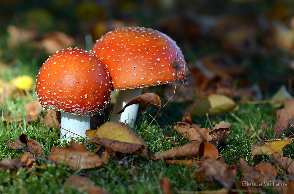 Autumn.....it's toadstool season! by Glenda Williams
