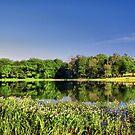 Morning Reflections - Lake Pickens, Sherman, Texas, USA by aprilann