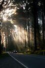 Yarra Ranges National Park by Timo Balk