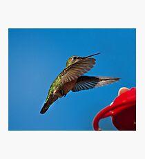 Humming Bird Landing Photographic Print