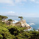 Lone Cypress, California by Deborah Singer