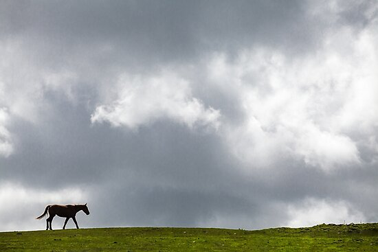 Walking Solitary Horse by Heidi Stewart