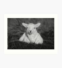 Cheeky Little Lamb Art Print