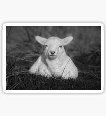 Cheeky Little Lamb Sticker