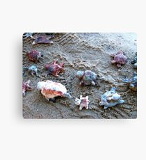 Turtle Tracking Canvas Print