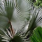 Palm of spikes - gloves needed!  by Robyn Selem