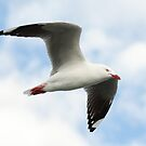 Seagull at Port Hughes by jermesky