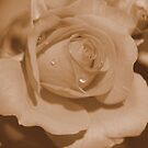 Sepia Rose by Chappy
