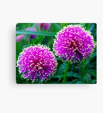 DOUBLE THE TICKLED PINK! Canvas Print