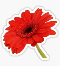 Red Gerbera Daisy Sticker