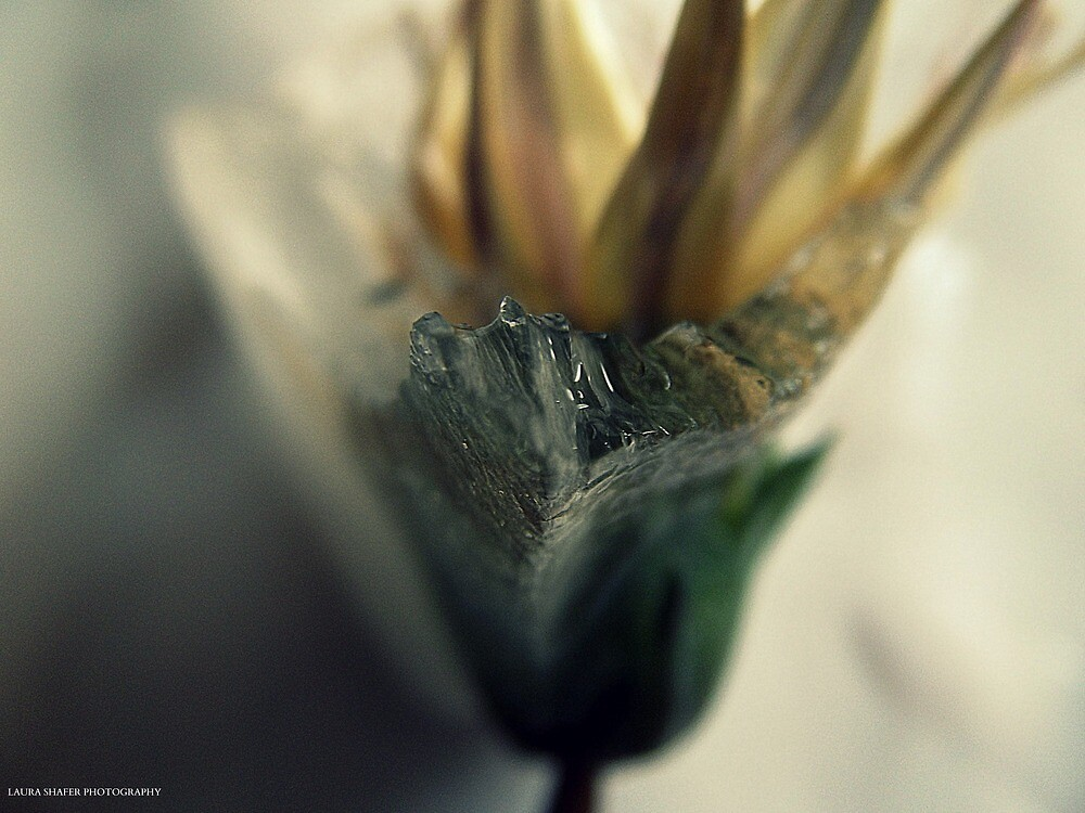 ICED FLOWERS #125 by Laura E  Shafer