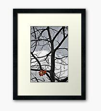 Halloween Tree Framed Print