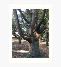 Berkeley tree Art Print