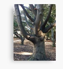 Berkeley tree Canvas Print