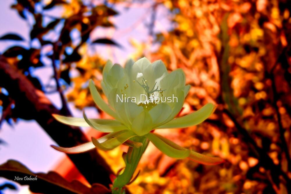 When Epifillum Blooms at the Garden by Nira Dabush