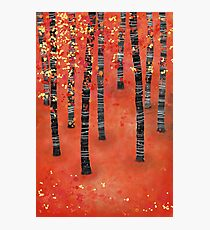 Birches Photographic Print
