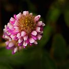 pink scepter by lensbaby