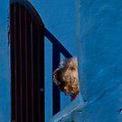 Behind bars by Gabor Pozsgai