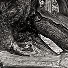 Stump by Jeffrey  Sinnock