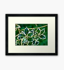Holly leaves Framed Print