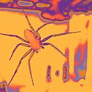 spider on the window by tego53