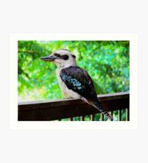 Kookaburra sits ............................. Art Print