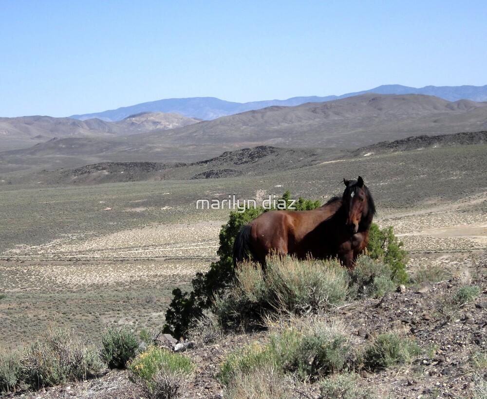 Wild As The Wind by marilyn diaz
