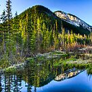 From the Forest by Justin Atkins