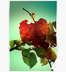 Like Autumn Leaves.... Poster
