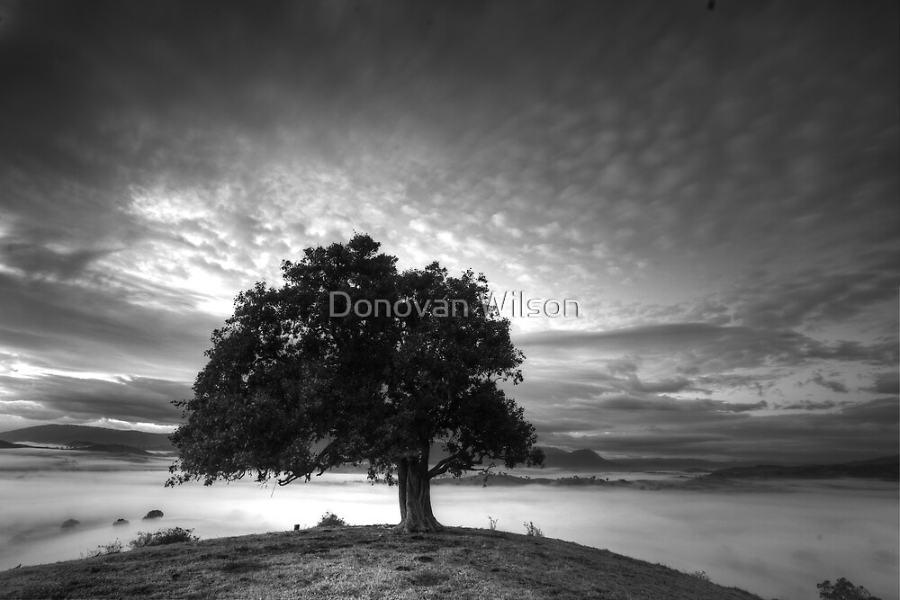 One Tree view and the Acheron valley by Donovan Wilson