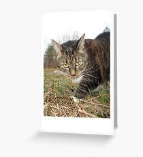 Lucy Lawns Greeting Card